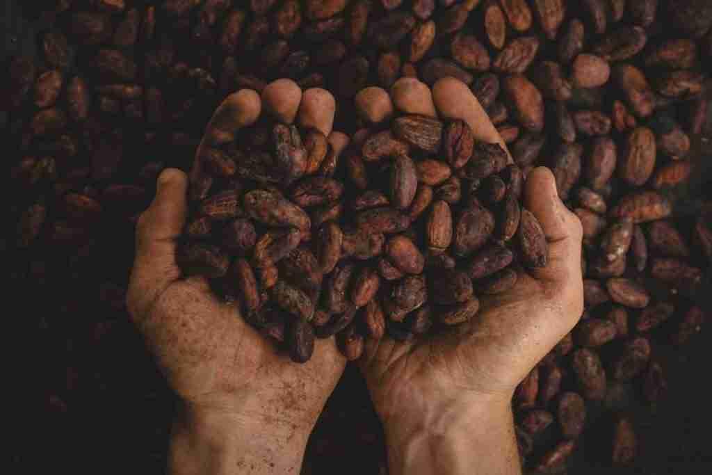 La produzione del cioccolato ai giorni nostri